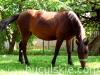 granda1-konie-huculskie