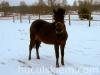 granda5-konie-huculskie