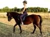granda6-konie-huculskie