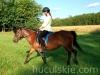 granda8-konie-huculskie