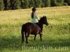 granda9-konie-huculskie