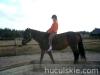 Jesien2011-konie-huculskie-10