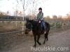 Jesien2011-konie-huculskie-11