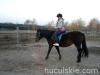 Jesien2011-konie-huculskie-12