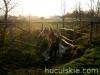 Jesien2011-konie-huculskie-13
