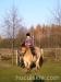 Jesien2011-konie-huculskie-2