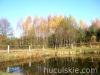 Jesien2011-konie-huculskie-21