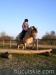 Jesien2011-konie-huculskie-3