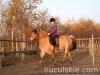 Jesien2011-konie-huculskie-4
