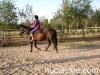 Jesien2011-konie-huculskie-5