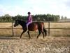 Jesien2011-konie-huculskie-6