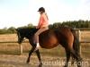 Jesien2011-konie-huculskie-9