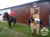 Huculskie jesień konie 1