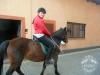 Huculskie jesień konie 3
