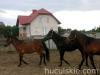 lato2008-konie-huculskie-2