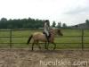 lato2009-konie-huculskie-10