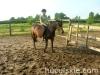 lato2009-konie-huculskie-11
