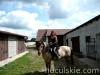 lato2009-konie-huculskie-15