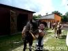 lato2009-konie-huculskie-16