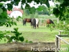 lato2009-konie-huculskie-19