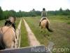 lato2009-konie-huculskie-02
