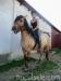 lato2009-konie-huculskie-27