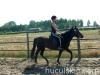 lato2009-konie-huculskie-28