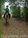 lato2009-konie-huculskie-03