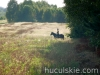 lato2009-konie-huculskie-33