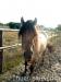 lato2009-konie-huculskie-34