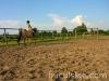 lato2009-konie-huculskie-04