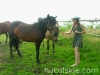 lato2009-konie-huculskie-07