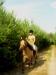lato2009-konie-huculskie-08