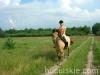 lato2009-konie-huculskie-09