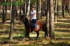 lato2011-konie-huculskie1