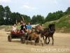 lato2011-konie-huculskie10