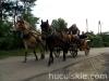 lato2011-konie-huculskie12