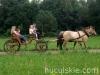 lato2011-konie-huculskie13