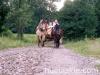 lato2011-konie-huculskie14