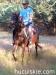 lato2011-konie-huculskie16