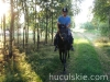 lato2011-konie-huculskie17