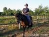 lato2011-konie-huculskie18