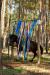 lato2011-konie-huculskie2