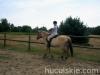 lato2011-konie-huculskie22