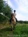 lato2011-konie-huculskie23