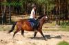lato2011-konie-huculskie4
