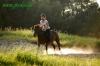 lato2011-konie-huculskie5