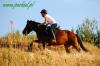 lato2011-konie-huculskie6