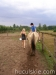 lato2011-konie-huculskie9