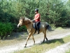 lato2013-konie-huculskie-1